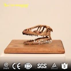 Mini allosaurus skull