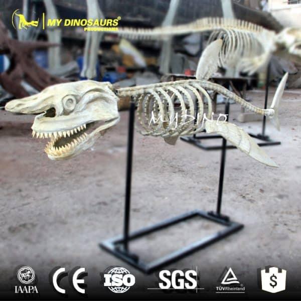 Shark skeleton.1