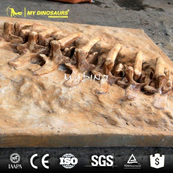 T REX rib skeleton