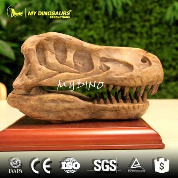 Velociraptor skull