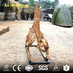 Dimetrodon Skeleton 2