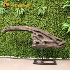 Parasaurolophus Skull 1