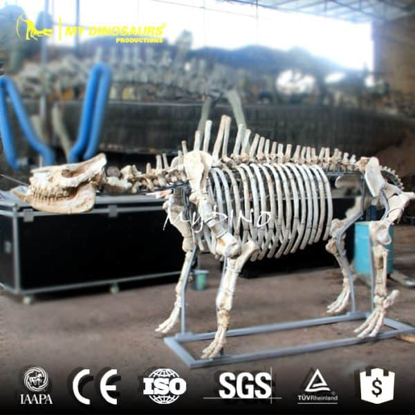 Chilotherium Skeleton 1