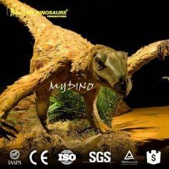 Feathered Velociraptor 3