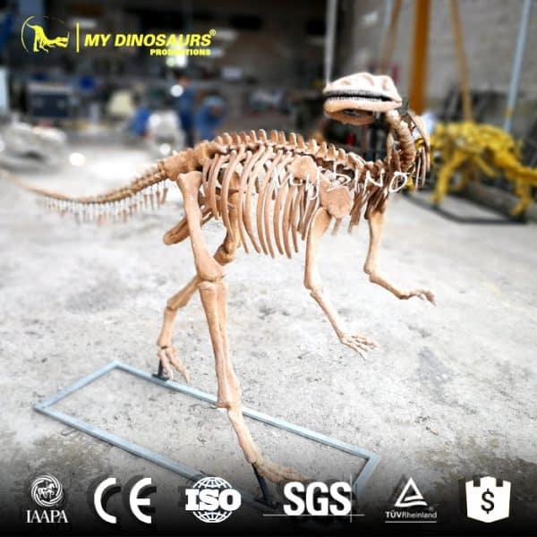 Yandusaurus Skeleton Replica