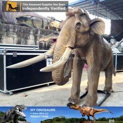 baby elephant4
