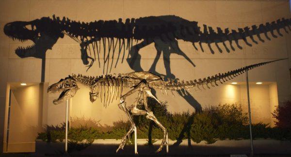 Best Traveling Dinosaur Exhibitions