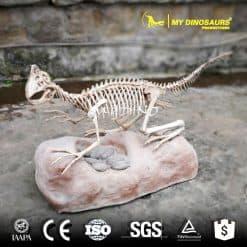 Oviraptor with egg fossil 1