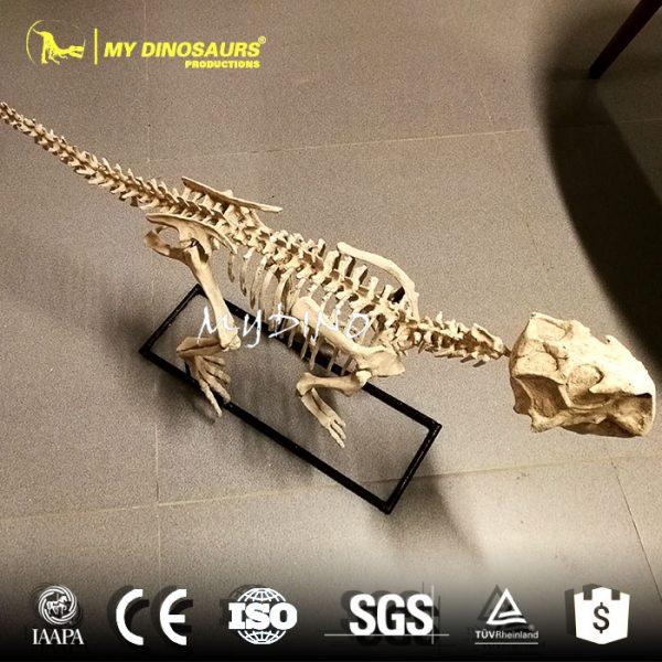 Psittacosaurus fossil 1