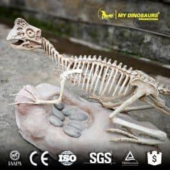 Skeleton fossil 1