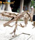 Velociraptor skeleton 2