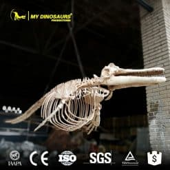 dolphin skeleton replica 1