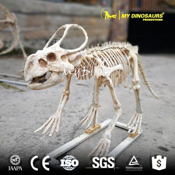 protoceratops 1
