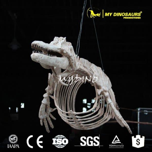 skeleton of dolphin