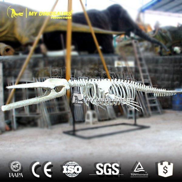 Whale skeleton 2