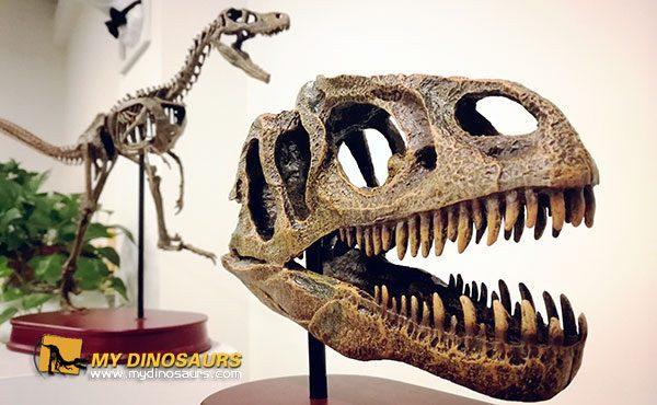 Mini dinosaur fossil