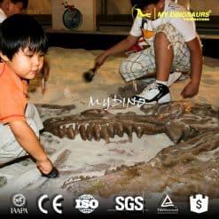dinosaur skeleton excavation