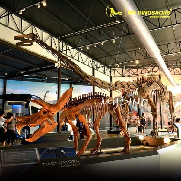 Dinosaur planet dinosaur skeleton