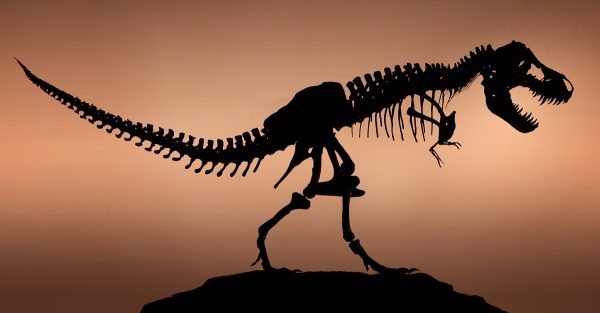 """Denver, Colorado, USA     Stan the Tyrannosaurus Rex, """"tyrant lizard king,"""" excavated and prepared by the Black Hills Institute and named after the discoveror, Stan Sacrison.     Image by © Louie Psihoyos/Corbis"""