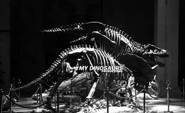 film props dinosaur skeleton