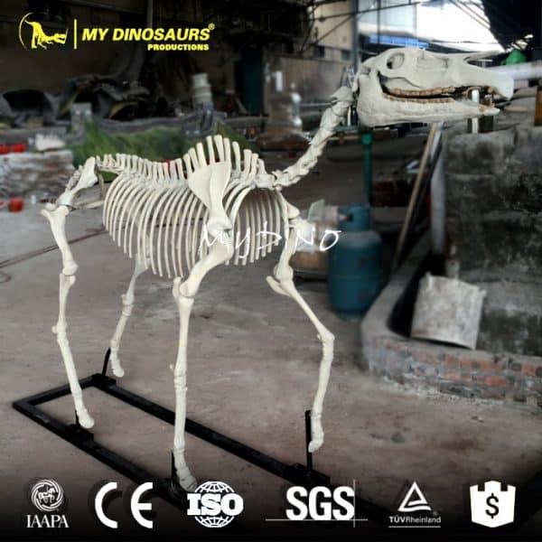 Hipparion Horse Skeleton