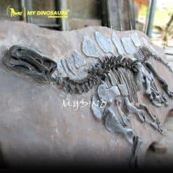 Stegosaurus Fossil Wall 1