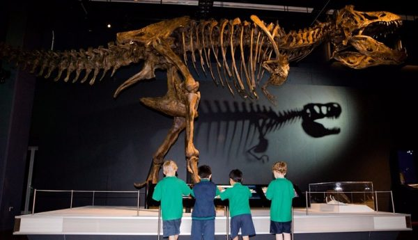 content dinosaurs australianmusem