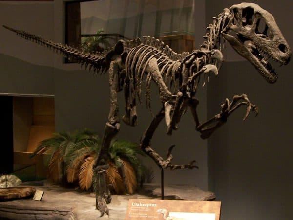 Utahraptor skeleton namal