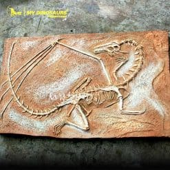 Dragon fossil wall
