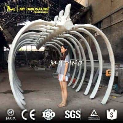 whale skeleton for sale CD042