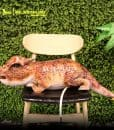 Baby Pachycephalosaur