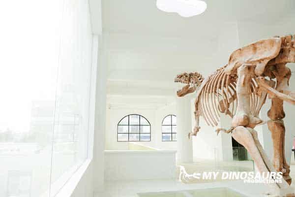 dinosaur skeleton props