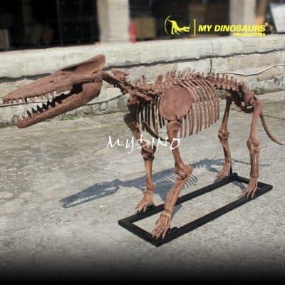 Pakicetus Skeleton 1