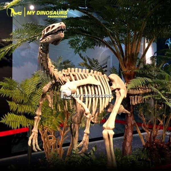 Herrerasaurus skeleton 1