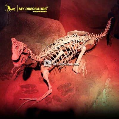 Oviraptor Skeleton.1