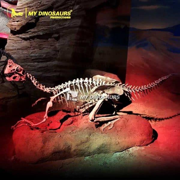 Oviraptor Skeleton.2
