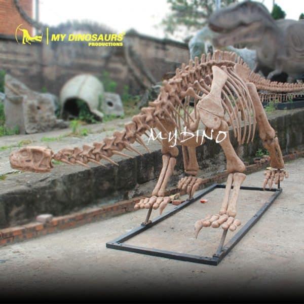 Shunosaurus skeleton 1