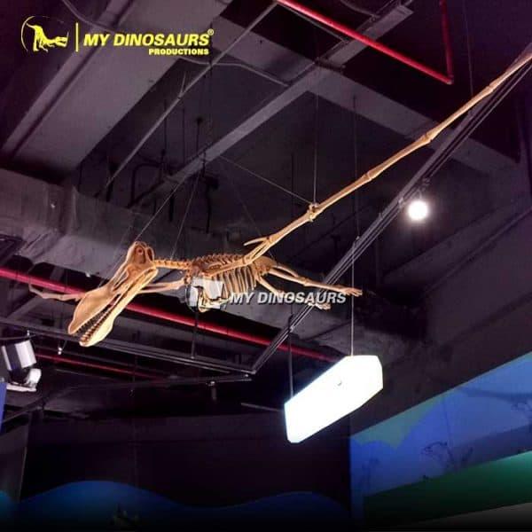 pterosaurs skeleton 1