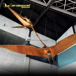 Quetzalcoatlus Skeleton 1