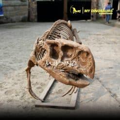 Life Size Dinosaur Skeleton 1
