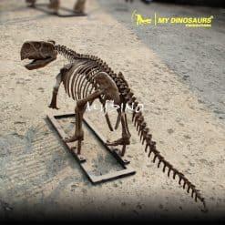 Psittacosaurus skeleton 1