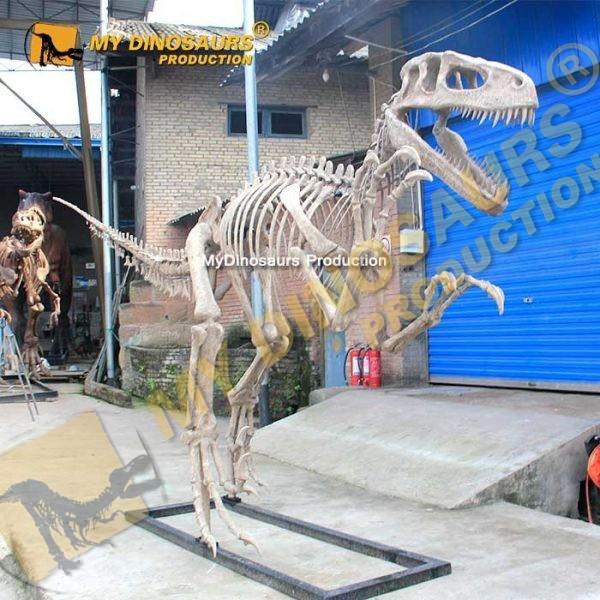 Utahraptor skeleton 1