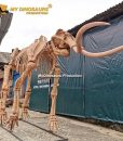 Woolly mammoth skeleton 4