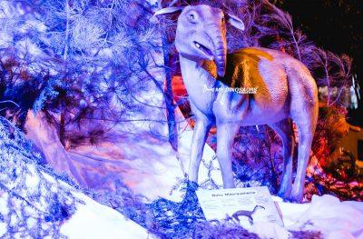 artificial ice age animal exhibition 4