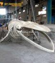 8m blue whale skeleton 4