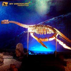 plesiosaur skeleton 1