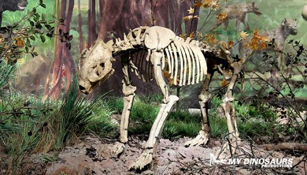 mydinosaurs animal skeleton