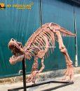 6.3m T rex skeleton 1