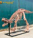 6.3m T rex skeleton