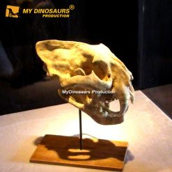 Animal skulls smilodon